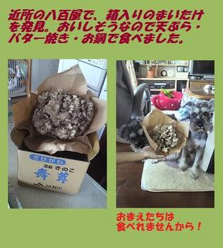 携帯取り込み10年11月ブログ①.jpg